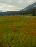 TallGrass Valley