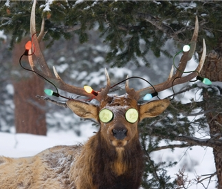 Holiday Elk